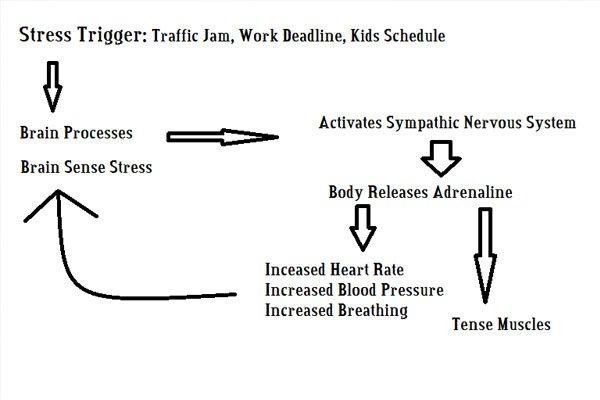 Stress and your autonomic nervous system