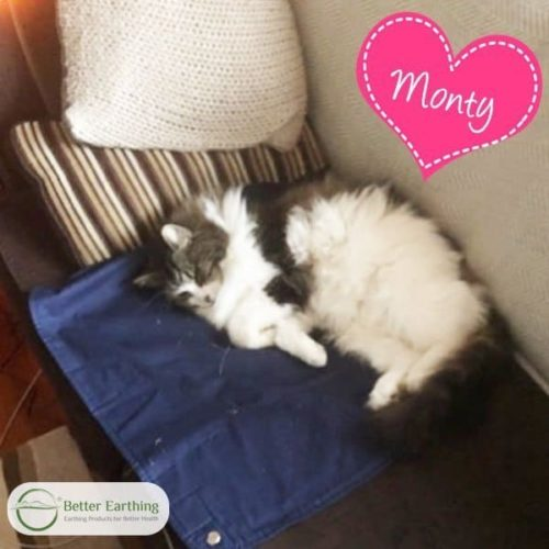 earthing mat for cats